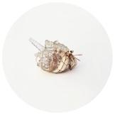 hermit crab - santorini